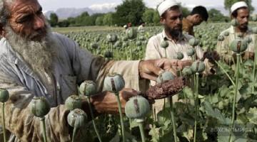 Афганский опий заполоняет планету