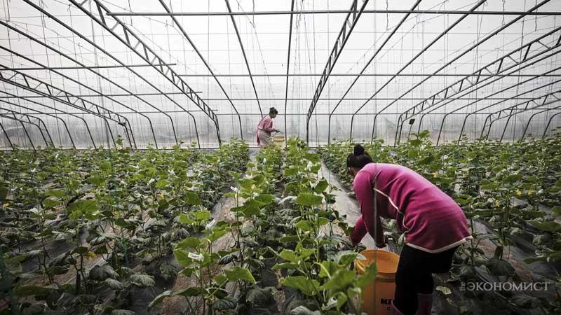 Китайцы перешли на органику