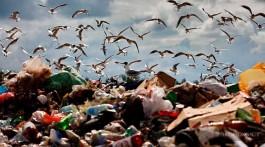 Які чотири кроки має зробити влада, щоб Київ не спіткала сміттєва криза