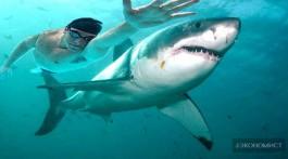 Майкл Фелпс проиграл акуле на стометровке две секунды