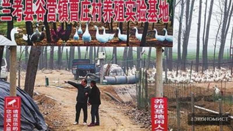 Стратегия «адресного оказания помощи нуждающимся» в Китае