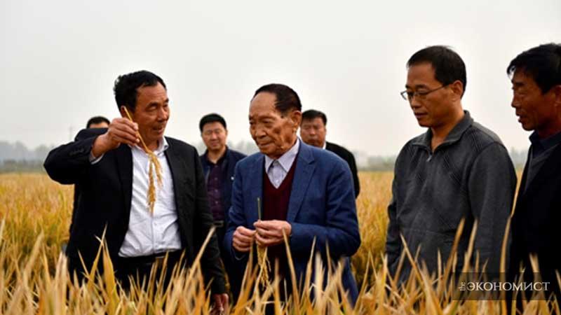 В Китае установили новый мировой рекорд урожайности супер-риса