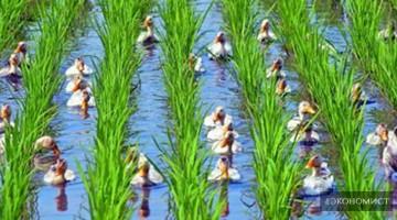 Китай утвердил дорожную карту для развития экологически чистого сельского хозяйства