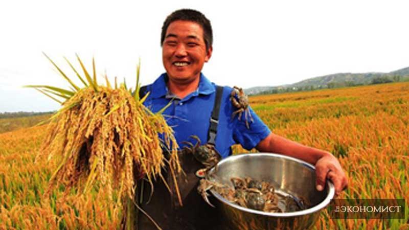 Рисоводы в районе Хэншань города Юйлинь провинции Шэньси наслаждаются двойным урожаем риса и крабов. Источник фото: сайт народного правительства района Хэншань города Юйлинь