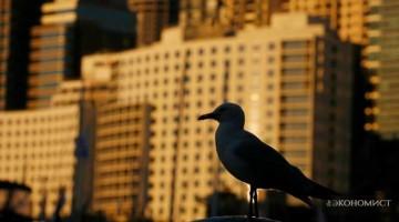 Эволюция в городской среде: мутации и новые виды