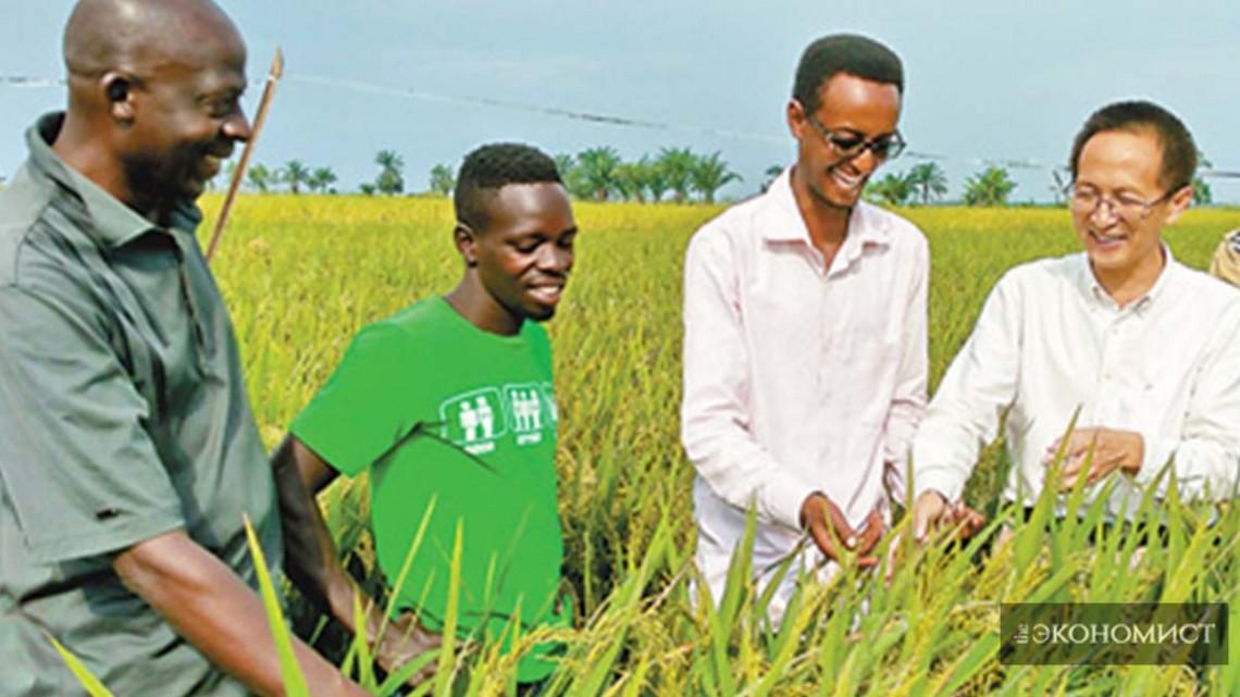 Китай построил центры продвижения и демонстрации сельскохозяйственных технологий в 14 странах Африки